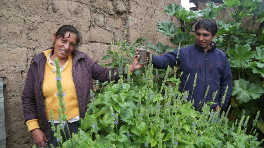 Sulma, Perú